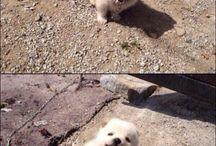 puppies / 귀여운 강아지 사진들