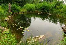 Swim Ponds & Earth Dams / by Element Eco-Design