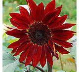 flowers i like / by sdr mld