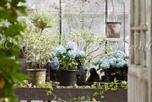 Greenhouse and Orangeries / Ideas for greenhouses and Orangeries