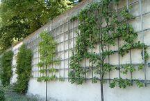 Planten Buiten
