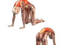 Muscles in Yoga