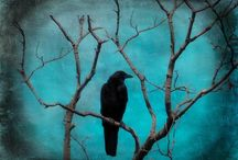 RAVENS, CROWS AND BLACKBIRDS / by Daryl King