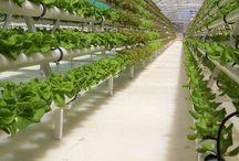 Hidroponik / Artikel-artikel terkait tentang sistem pertanian hidroponik