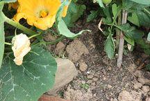 Orto / Costruite un luogo ideale per erbe aromatiche, per le verdure di stagione, per gli sfizi da scoprire giorno per giorno. In piccoli spazi o per grandi geometrie, le bordure in corten assecondano con intelligenza e discrezione la vostra voglia di natura.