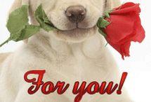 Pentru tine....