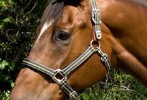 Horse detail / by Ge Ferris