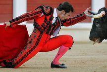 The Art of Bullfighting