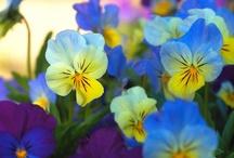 Botanical Beauty!