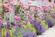 Trägård
