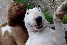Humor / Χιουμοριστικές εικόνες!