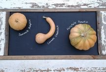 The Gourd and Allium Families