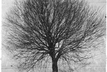 Black and white. Trees / Black-and-white photos of trees