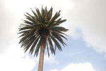 Lanzarote / Diario di viaggio della nostra esperienza a Lanzarote, isola magica delle Canarie. Info e ispirazioni su dove andare e cosa vedere a Lanzarote e su come raggiungere Lanzarote da Fuerteventura