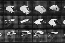 Put a Bird on It! / A curated collection of Avian art.