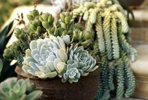 Horticulture: Succulents and Cacti / by Debbie Cooley