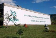 Oficina de Avaliação do Estado de Conservação de Rodentia / Lagomorpha / Participação da SBMz e de diversos especialistas para discussão e atualização do estado de conservação dos roedores e coelho brasileiros.