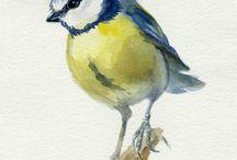 watercolor birds/animals