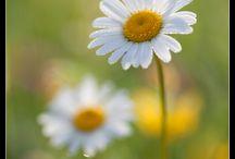 Colori e fiori..
