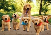 Mamas Perro Adorables