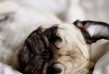 Pets/Animals / by Tessa Romney