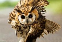 Owl- bird