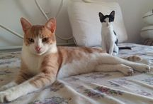 my cats !!