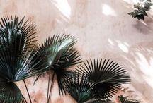 palm leaves inspo