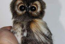 Cute Animal :3