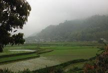 Chez On à Mu Cang Chai / La maison de monsieur On (ethnie Thaï blanc) à Mu Cang Chai, dans la région de Yen Bai, fait partie des maisons d'accueil que vous propose Vietnam Original Travel, dans le grand Nord du Vietnam