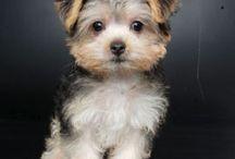 trop cute :)