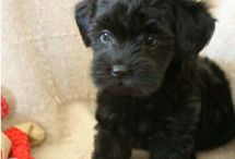 Puppy Life