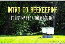 Beekeeping / On this board we collect pins related to beekeeping. The decline of honey bees is a real threat to our food supply. So anything we can do to increase the bee population will help us now and in the future.