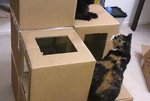 Casa pisici