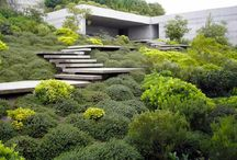 Contemporary evergreen garden