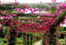 pretty rose garderns.