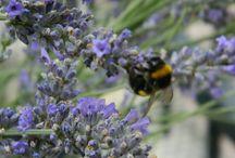 Aromatic Garden / Aromatic Garden