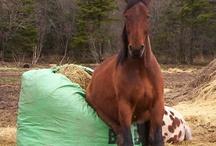 Horse 'N Around
