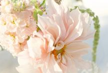 Wedding Flowers / by Leslie Taylor