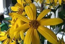 My blog: stress da giardino