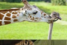 tanti animali insieme