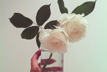 Flowers / by OhSet! regalos