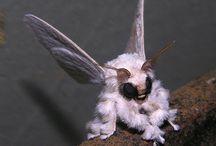 Bugs Cute and Weird