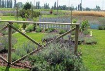 Creare il proprio giardino con lavande, piante aromatiche, salvie ornamentali e piante perenni