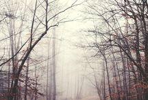Падения деревьев
