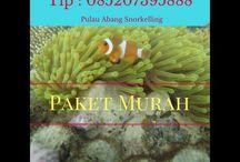 Batam Snorkeling Price, Contact : 085207395888