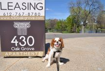 Pet Friendly Properties / Lets follow Louie, a Cavalier King Charles Spaniel with impeccable taste (and a big diva attitude) as he visits our StuartCo pet friendly communities. Louie will be reporting back with his take on the property and the surrounding neighborhood.