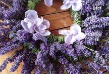 {PICTURES} ~ Lavender ~