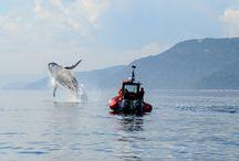 Baleines de la Côte-Nord / Photos de baleines mixtes.