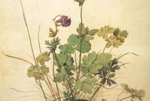 Botanical drawings and paintings